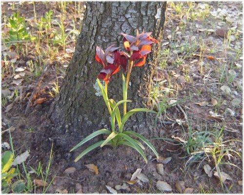 orchidee sauvage reunion