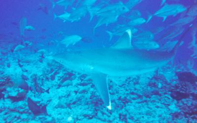 faire si rencontre requin